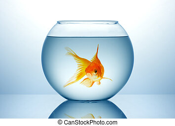 Fish bowl with gold fish - Fish bowl with gild fish in blue...