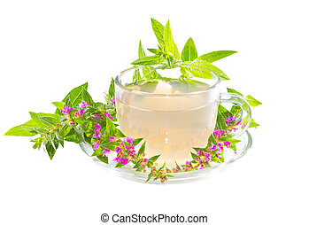 té, o, infusión, púrpura, lythrum