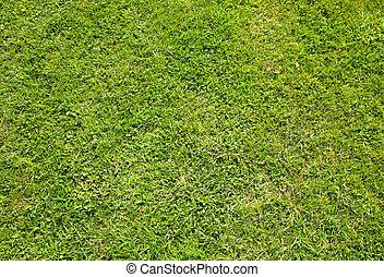 Green summer grass texture close up background.