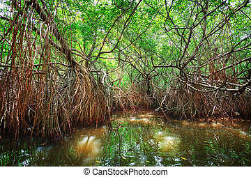 Thickets of mangrove trees in the tidal zone. Sri Lanka,...
