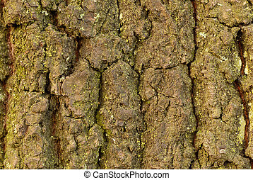Tree bark texture - Closeup of a grainy tree bark, useable...