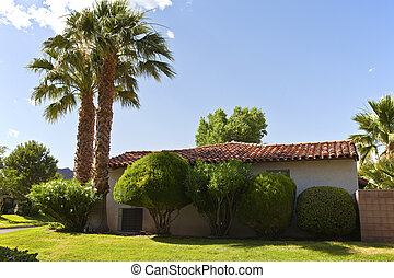 Palm trees in a Boulder city neighborhood Nevada - Palm...