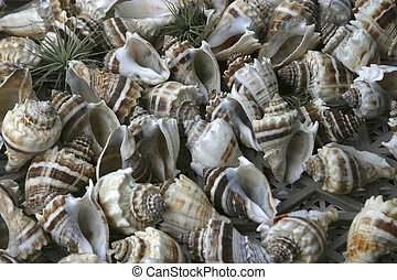 Seashells in cluster at seaside