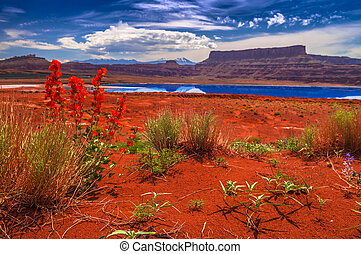Wild Flowers near Evaporation Ponds - Potash Road in Moab...