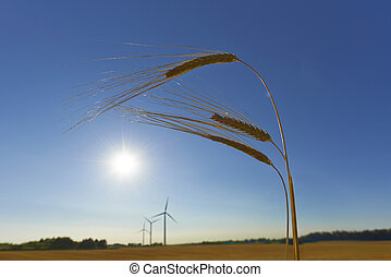 Sustainable agriculture and energy