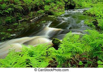 helechos, bosque, corriente