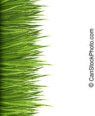 Nature background with green grass. Vector.