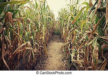 Corn Field - A corn maze in Autumn.