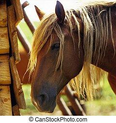 libre, caballo