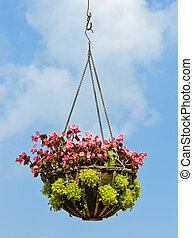 Flower hanging basket in blue sky