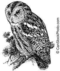 Bird Tawny Owl