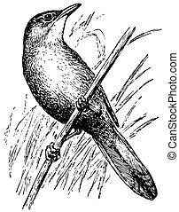 Bird Thick-billed Warbler