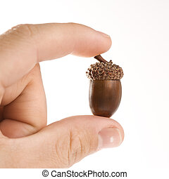 Hand holding acorn. - Hand holding up single acorn between...