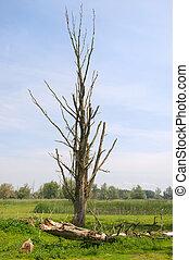Clearcutted nature - clearcutted nature in Dutch...