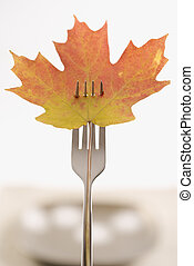 Fall harvest concept. - Red and green Maple leaf pierced by...