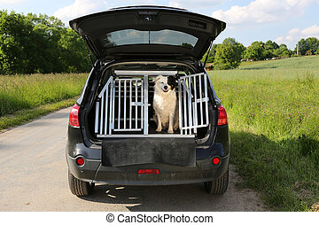 Dog in a car - Dog sitting in a car trunk and waiting for...