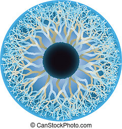 blue human eye, vector - blue human eye, iris and pupil...