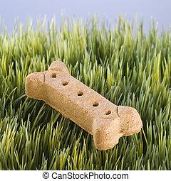 Dog bone in grass. - Studio shot of a dog treat laying in...