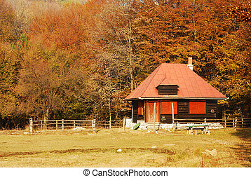 mountain hut in the forest