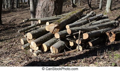 forest deforestation area - branches covered a pile of logs...