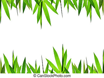 green bamboo leaves Background