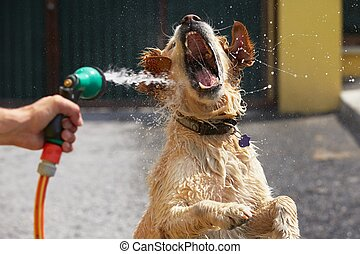 Hot day with dog - Playful dog is catching water stream -...