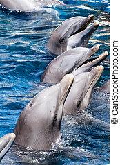 Úszás, pocsolya, delfinek