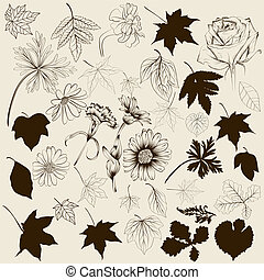 Collection of vector hand drawn lea - Set of vector flowers...