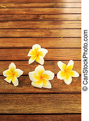 Plumeria flower wooden - abstract, backdrop, background,...