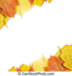 border from different autumn leaves, background autumn theme