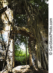 Overgrown abandoned structure. - Close up of doorway...