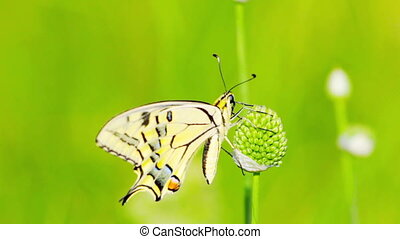 butterfly and green grass