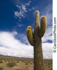 Desert totem