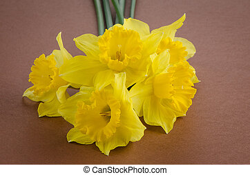Jonquil flowers - Yellow jonquil flowers on paper background...