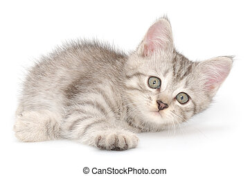 Kitten on a white background - Small gray kitten on a white...
