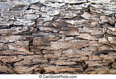Velvet Mesquite Pattern - The rich and varied bark of the...