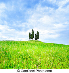 Cypress group and field rural landscape in Orcia, San...