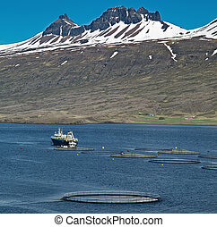 aquaculture salmon farm - aquaculture salmon fishing farm...