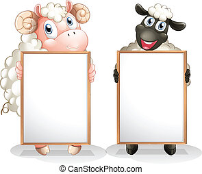 Two sheeps with empty boards - Illustration of the two...