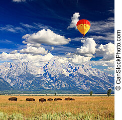 Bisons, Grandiose, teton, national, Parc