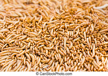 Mealworms is the common name for the larvae of the beetle...