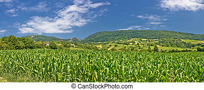 Green agriculture fields panoramic view