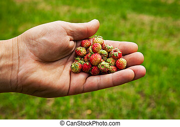 Wild strawberry in the hand