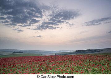 Poppy field landscape in Summer countryside sunrise