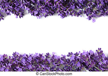 Frame with lavender - Frame with purple lavender flowers on...
