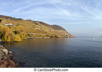 wineyards,  lavaux