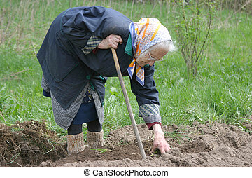 Humpback 80-90 years old woman working at her garden, real...