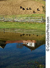 Rural reflections - Rural scenic: reflection in puddle of a...