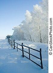 Vinter, landskap, träd