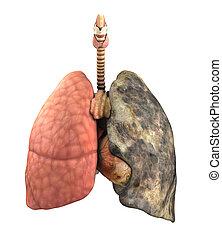 pulmão, doença, antes de, após